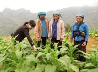Tuyển tri thức trẻ về phát triển nông thôn, miền núi