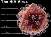 Tìm ra cách chặn virus HIV phát triển thành AIDS