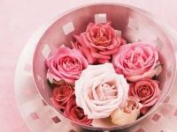 Hoa hồng tươi nở trên nền thời trang Ý