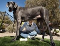 Chú chó cao nhất thế giới qua đời