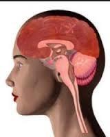 HIV có thể gây tổn thương não ngay trong giai đoạn đầu của bệnh.