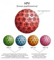 Stress khiến hệ miễn dịch suy yếu trước virus HPV