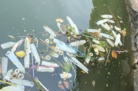 Hà Nội: Bao cao su nổi trắng một góc hồ Tây, người dân chèo thuyền ra vớt