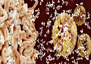 Đột phá: Phát hiện ra kháng thể mới có thể tiêu diệt 99% chủng virus HIV