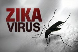 Thử nghiệm hiệu quả vắc xin phòng virus Zika trên khỉ
