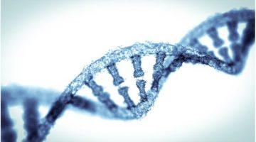 """Các nhà khoa học phát hiện 52 """"gene thông minh"""" quyết định 5% trí tuệ của bạn"""