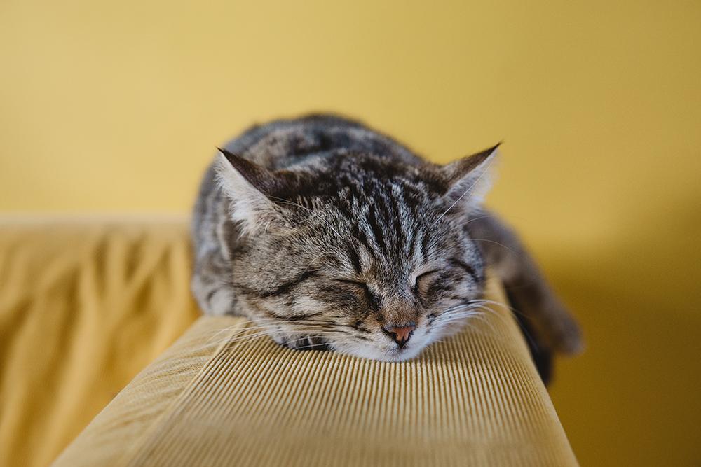 """""""Lời thú tội ngọt ngào"""" của hội những người yêu mèo"""