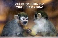 Bật cười với những hình ảnh cực độc về loài khỉ