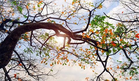 Đời người như bốn mùa, có nắng đẹp cũng sẽ có mưa giông