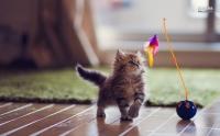 Học cách yêu thương bản thân từ các chú mèo