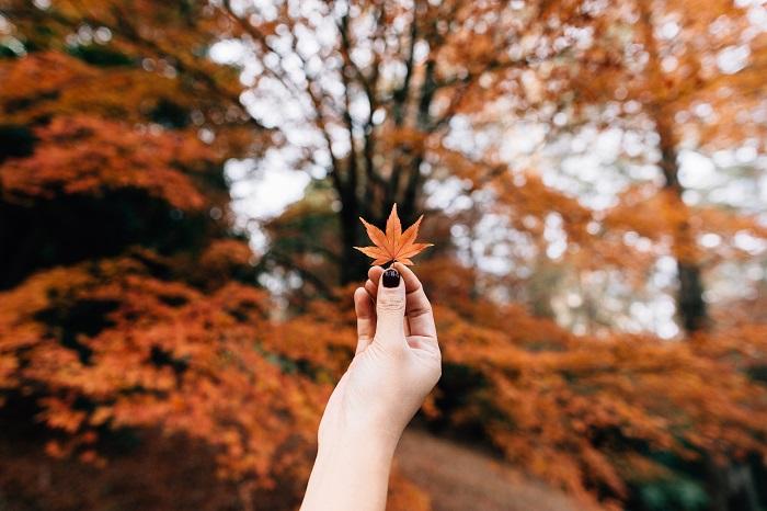 Mùa thu nào cho mối tình yêu xa