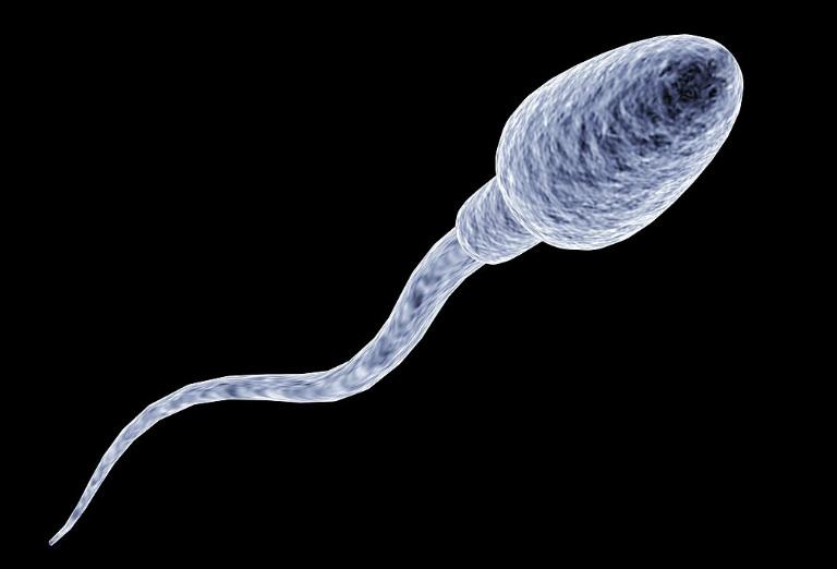 Thời gian sống của tinh trùng