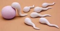 Bơm tinh trùng có tốt không - Đối tượng có thể áp dụng phương pháp IUI