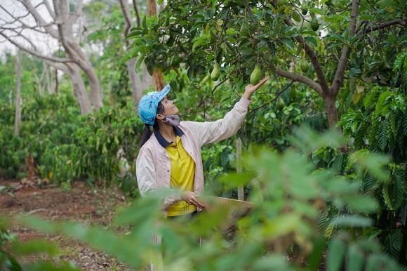 Gác lại công việc, H'Hen Niê về quê ra vườn tưới rau, lên rẫy hái điều
