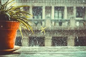 Sài Gòn mưa rơi