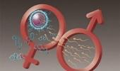 Các yếu tố ảnh hưởng đến sức khỏe sinh sản ở nam giới