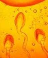 Lọc tinh trùng để sinh con cho người có HIV