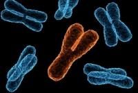 """Đàn ông sẽ """"diệt vong"""" nếu nhiễm sắc thể Y biến mất?"""