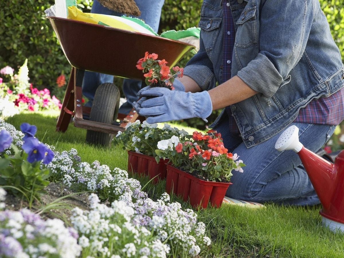 16 mẹo làm vườn giúp bạn tiết kiệm thời gian