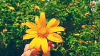 Lời hứa mùa hoa dã quỳ