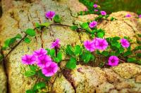 Loài hoa mang màu cô đơn